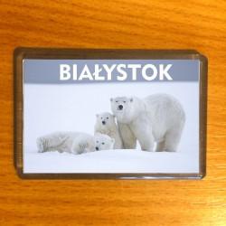 magnes Białystok niedżwiedzie polarne